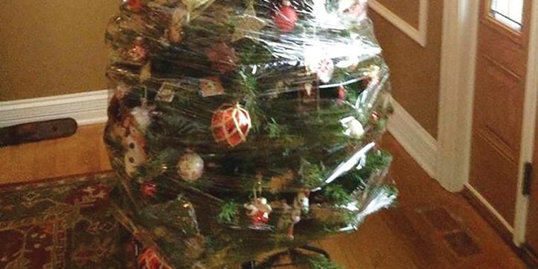 08-3-tree-wrapped-(Chris-Baldwin).jpg (219 KB)